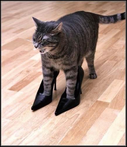 Кот в туфлях
