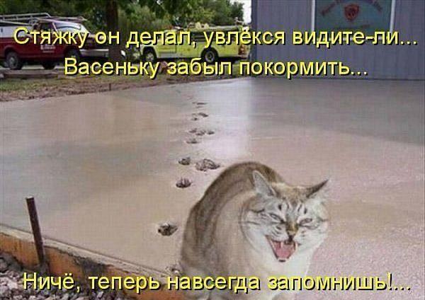 Кот прошелся по свежему бетону