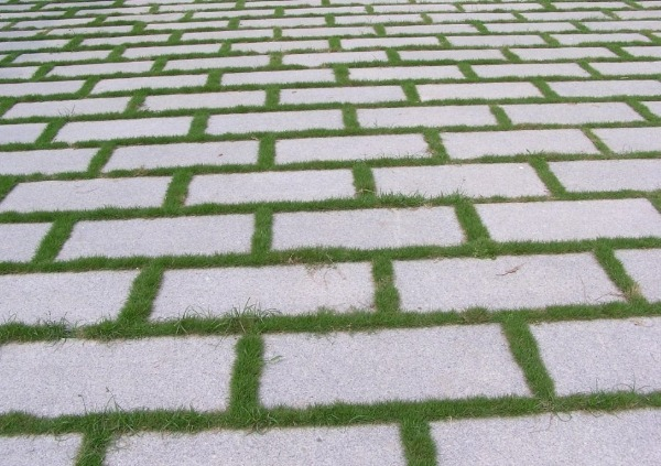 Оформление тротуарных швов травой